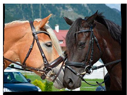 Herzlich Willkommen am Pferdehof Reiter!