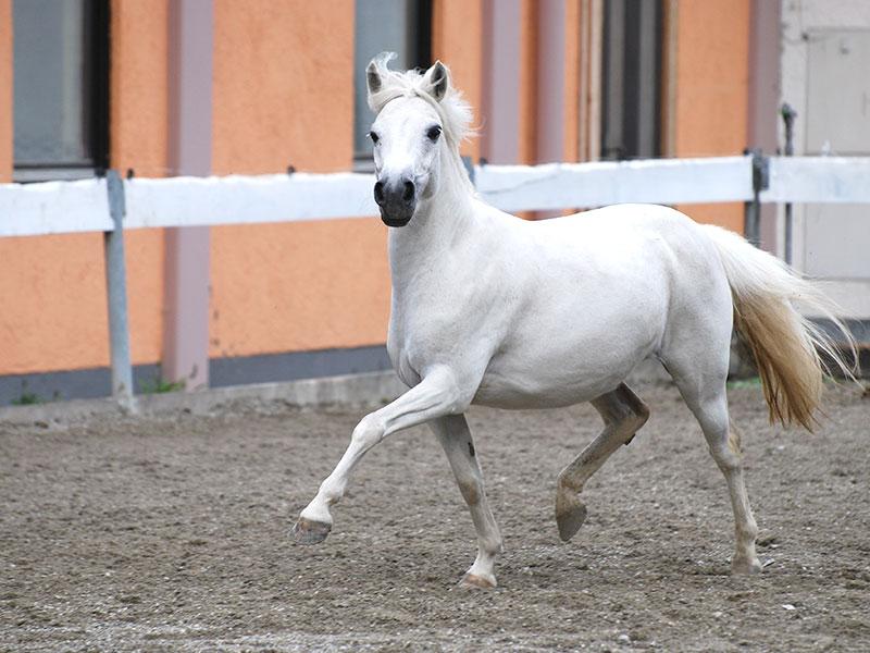 Pferdehof Reiter